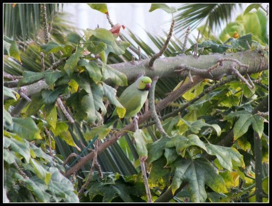 Spring Hotel Vulcano: Parakeet, taken from room 262