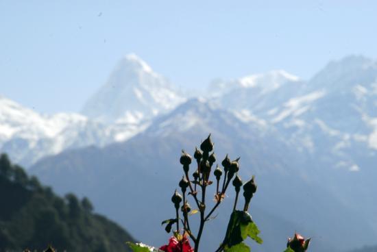 View of Nandadevi peak from Barsu