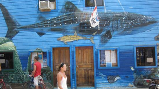 Whale Shark and Oceanic Research Center