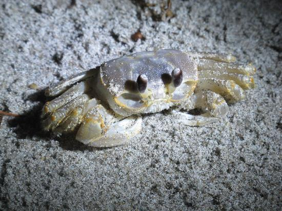 Windemere Inn by the Sea: One of the many crabs we caught at night