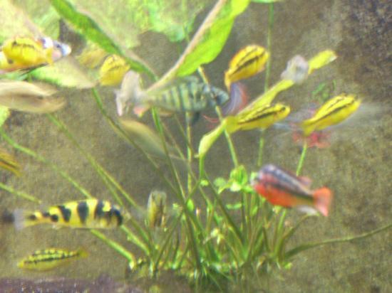 Public Aquarium of Brussels: mutlicolore