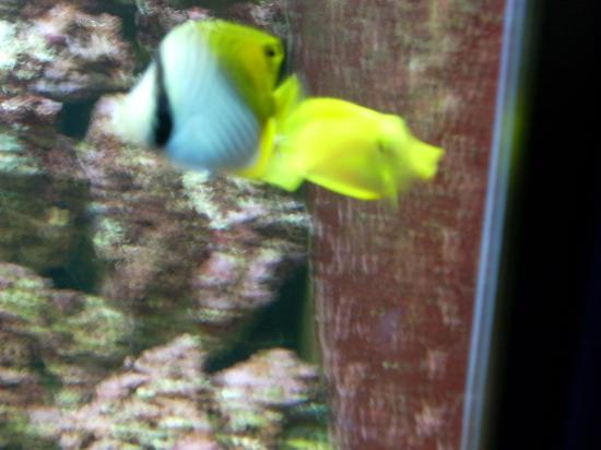 Public Aquarium of Brussels: des jaunes