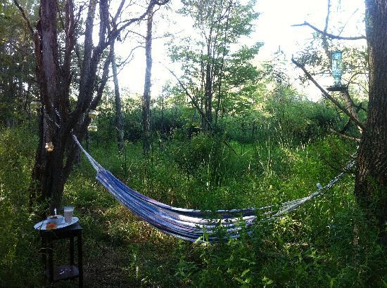 7 Willows Bed & Breakfast: Hammock in the Willows