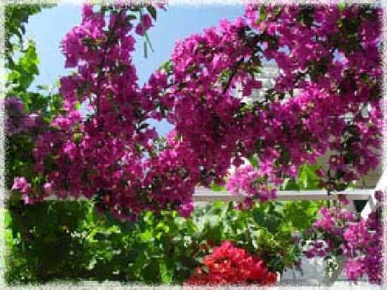 Apartments Avdic: Flower1