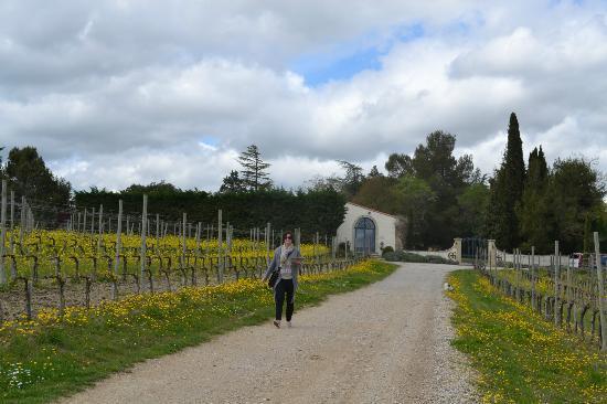 Vinecole: les vignes