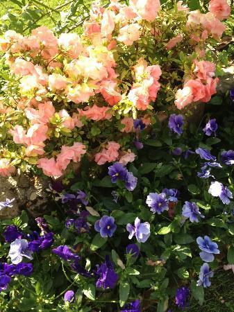 Villa Magnolia Relais: The garden!