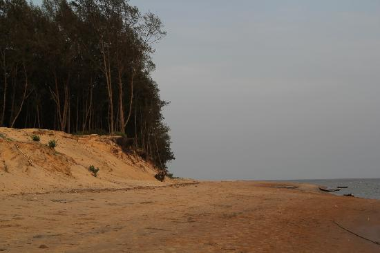 Balasore, India: Its on the other side of the delta at chandipur.Amazing !