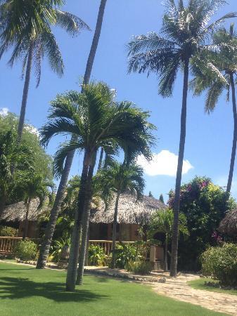 Mia Resort Mui Ne: Garden