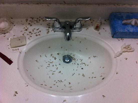 Ibis Bay Beach Resort: Living hell from the sink in the room