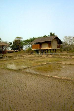 Diphlu River Lodge : Cottage overlooking rice field