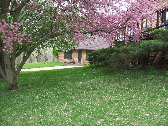 Quiet Walker Lodge: The flowering trees were just beautiful.