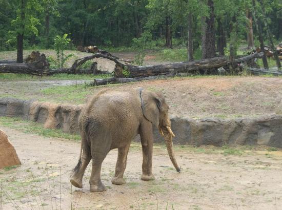 Birmingham Zoo: elephant