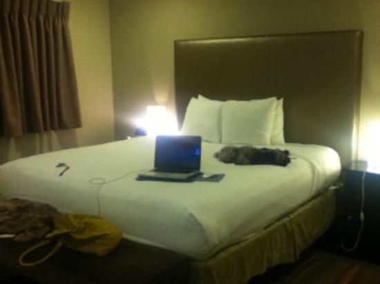 شيلتر هوتل لوس أنجلوس: king size bed