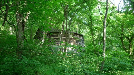 Blue Ridge Center for Environmental Stewardship: Walk in the woods