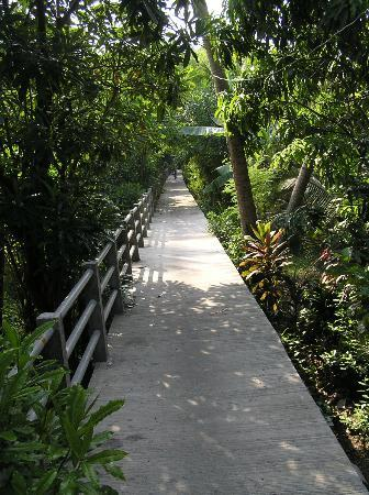 Bangkok Tree House: One of the paths winding their way through the Jungle from the Hotel