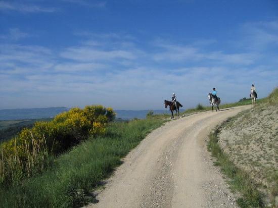 Fattoria Pieve a Salti: Passeggiata a cavallo tra i colli senesi