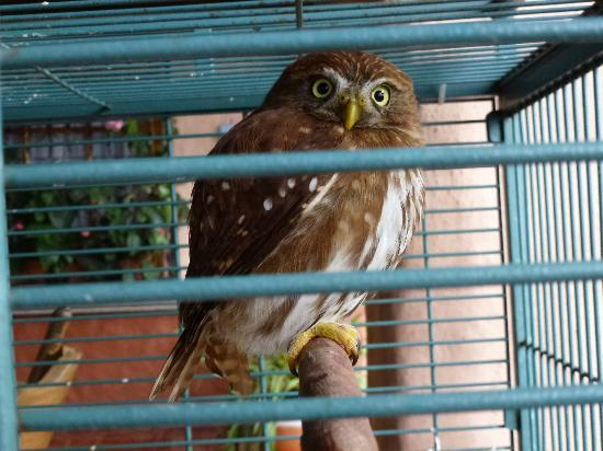 Toucan Rescue Ranch: One of many small owls