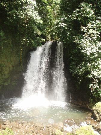 Nepenthe B&B: Jungle hike to water falls
