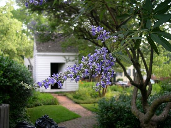 Carlyle House Garden