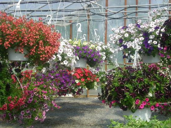 Shen-Val Farm Market: A view of inside our greenhouse.