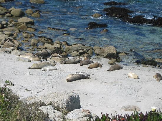 Cannery Row 5 Star Tours: Let's look for the baby Harbor Seals