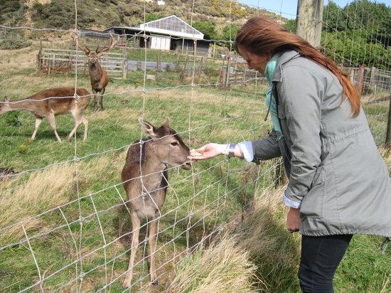 Kiwi Coastal Tours : Feeding the deer with Kim from Melbourne