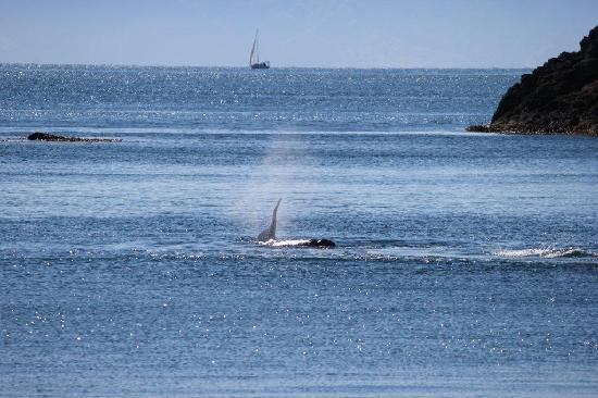 Orcas in Enclosure Bay May 2012