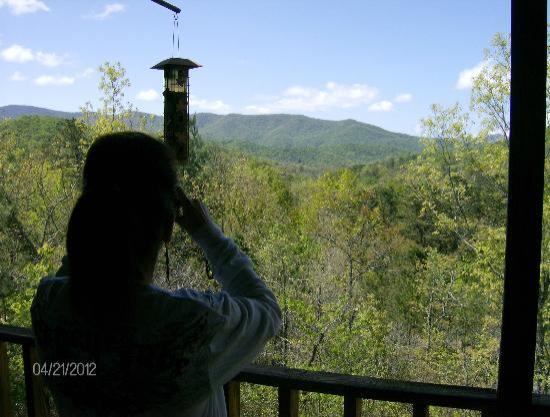 Laurel Mountain Cabins: Birds were a treat