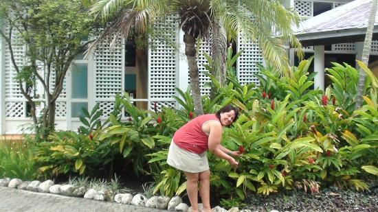 Grand Paradise Playa Dorada: Jardin du complexe hotelier