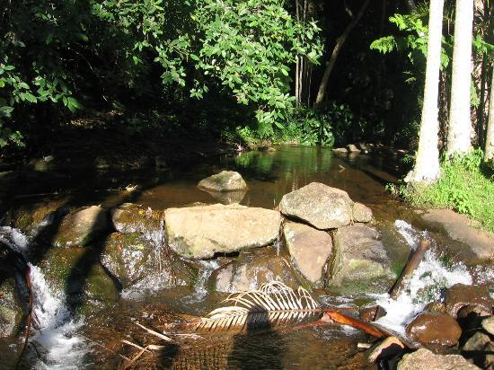 Mt Tamborine Stonehaven Guest House : Stream in grounds