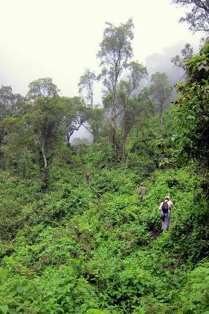 Mgahinga Gorilla National Park: Hiking up at the base