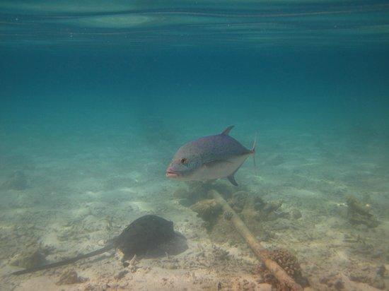 Makunudu Island: 浮潜时看到的鳐鱼