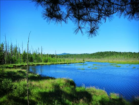 Paul Smith's College VIC: Barnum Pond from the Overlook on the Boreal Life Trail