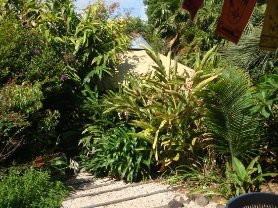 Nimbin Rox YHA: Gardens