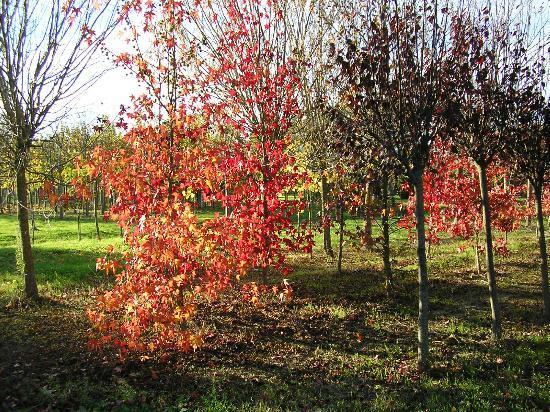 Agriturismo Villa Rosa: Boschi intorno al parco
