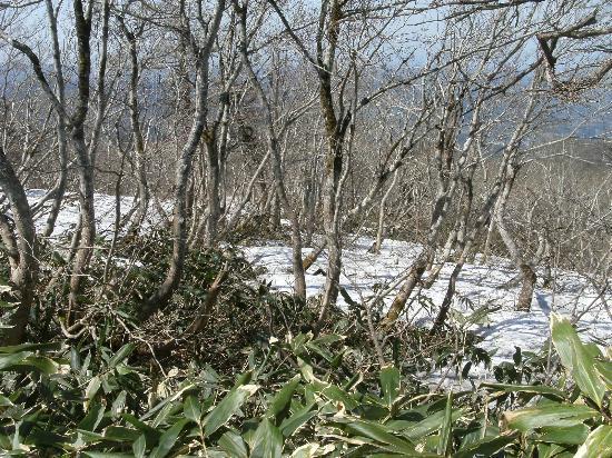 Mt. Hiruzen: 上蒜山への縦走路付近の残雪