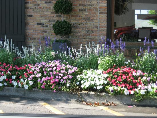 Hampton Inn Fairhope: Just a picture of flowers on our way out of the downtown