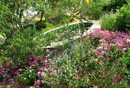 """Τζοντπούρ, Ινδία: """"Monet"""" gardens in Jodhpur"""