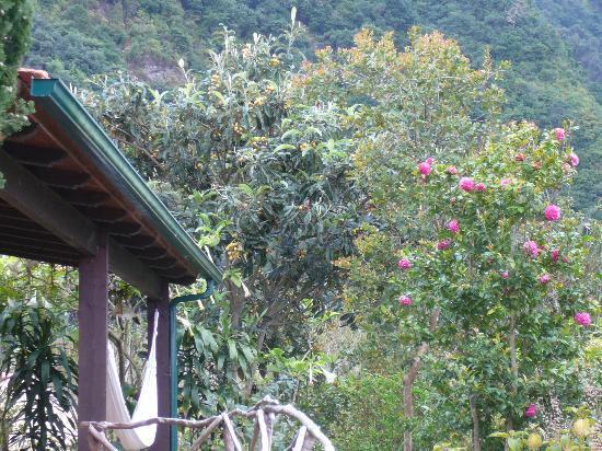Quinta do Arco: Garden
