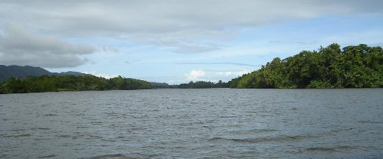 Cape Tribulation Wilderness Cruises : View on river
