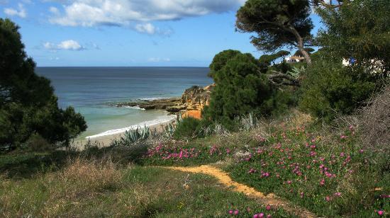 Praia dos Olhos de Água: SEa pinks and beach