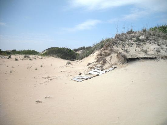 False Cape State Park: A view of the dunes