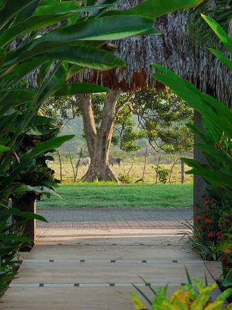 Alma del Pacifico Beach Hotel & Spa: Entrada