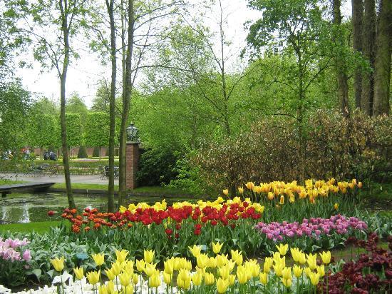 Keukenhof: Tulips and trees
