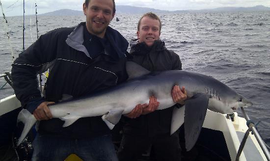 Ewings Sea Angling and Boat Charters: Shark Fishing