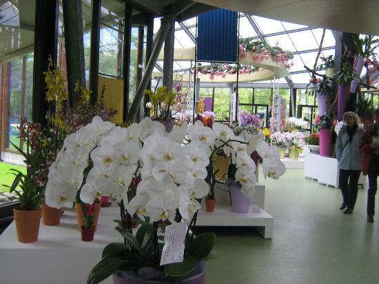 Keukenhof: Orchids