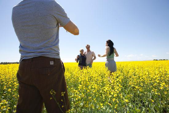 Alberta, Kanada: Canola field