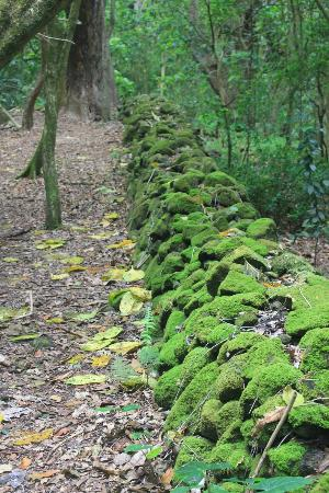 Halawa Valley: A moss covered rock wall beside the trail to the falls.