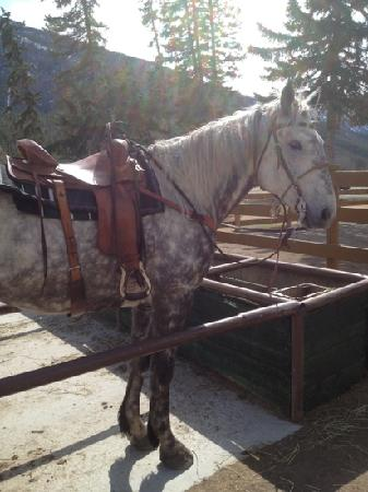 Banff Trail Riders: one of the guides horses