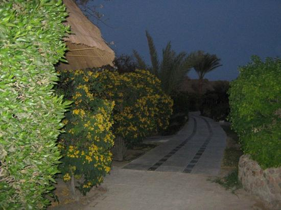 Panorama Bungalows Resort El Gouna: out of bangalow